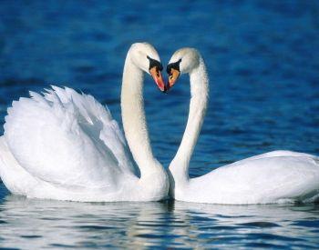 La Credenza Significato : Cosa significa amore per te? raja yoga newsletter corsi di meditazione